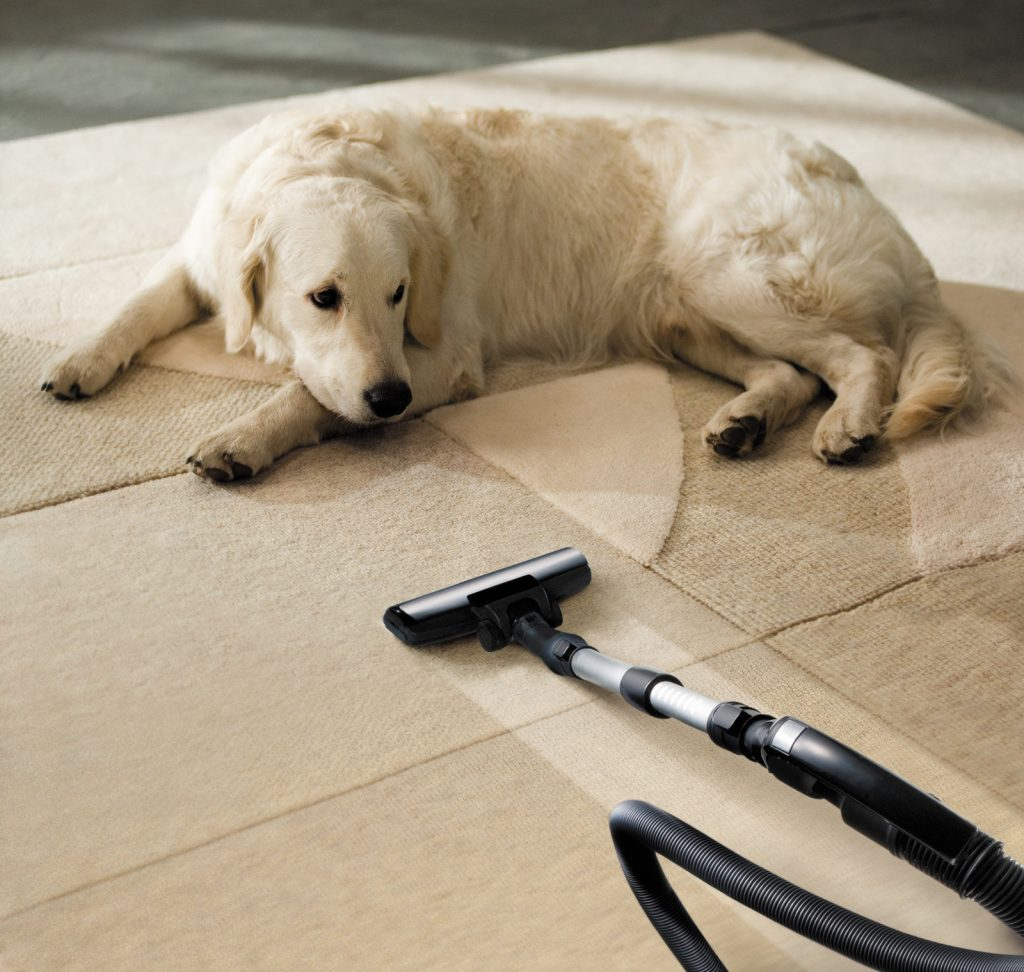 Cleaner is the Best Option pets carpet