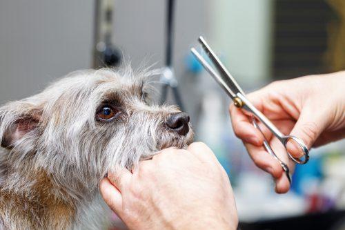 pet grooming service